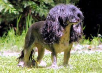 https://cf.ltkcdn.net/dogs/images/slide/190034-850x615-dog-with-mop-head.jpg
