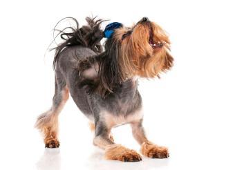 https://cf.ltkcdn.net/dogs/images/slide/190036-850x615-dog-with-blue-bow.jpg