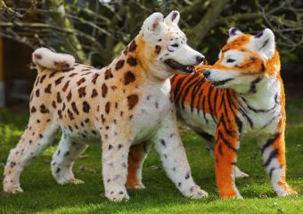 https://cf.ltkcdn.net/dogs/images/slide/190315-850x600-dogs_with_dyed_fur.jpg