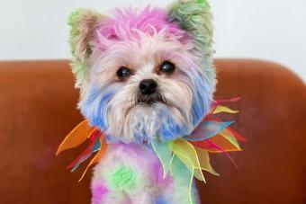 https://cf.ltkcdn.net/dogs/images/slide/190316-850x567-colored_spots_on_dog.jpg