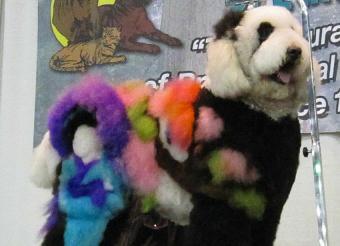https://cf.ltkcdn.net/dogs/images/slide/190401-850x615-colorful_dog.jpg