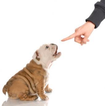 Disciplining dog