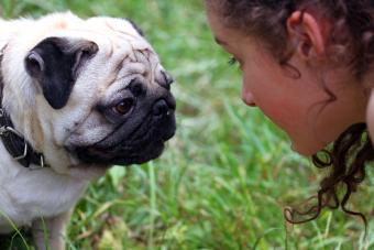 Dog and girl