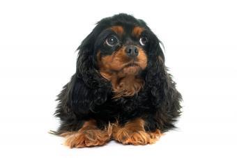 https://cf.ltkcdn.net/dogs/images/slide/194675-850x567-Pregnant-Anxious-Dog.jpg