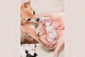 https://cf.ltkcdn.net/dogs/images/slide/194846-850x567-12-Another_pup_is_born.jpg