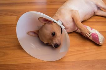 9 of the Most Common Dog Injuries