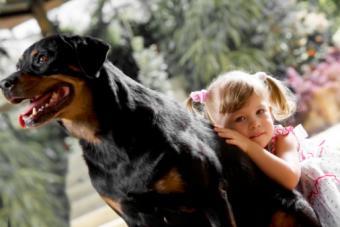 Are These Dog Breeds Safe Around Children?