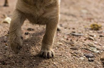 Puppy legs