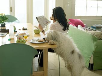 Human Foods That Can Make Dogs Sick