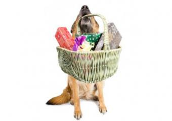 7 Posh Dog Birthday Gift Ideas