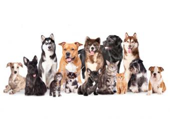 How to Decide Which Dog Breed Is Best for You