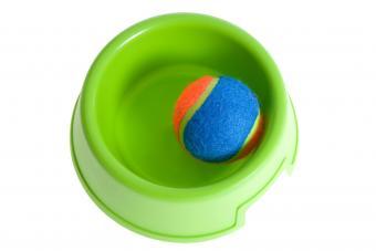 dog dish and ball