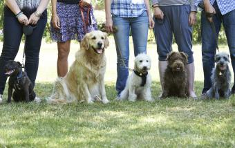 Group Of Dogs With Owners