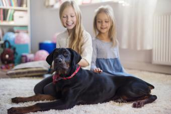 Protective Family Dogs