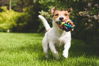 10 Relatively Safe American Made Dog Toys