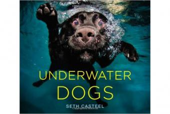 Underwater Dogs Book
