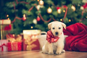 A Puppy at Christmas Time