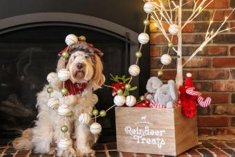 Christmas and Your Dog