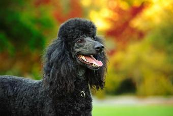 12 Medium-Size Dog Breeds and Photos