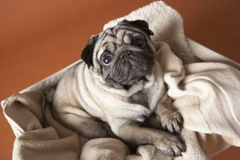 Small Dog Breed Pictures