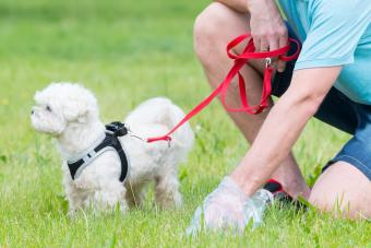 5 Biodegradable Dog Poo Bags to Consider