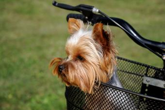 Bicycle Dog Carrier Options