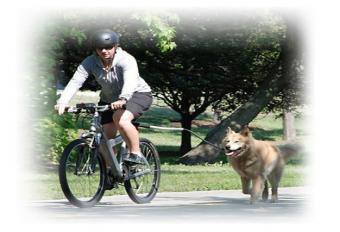 Pet Ego Cycleash