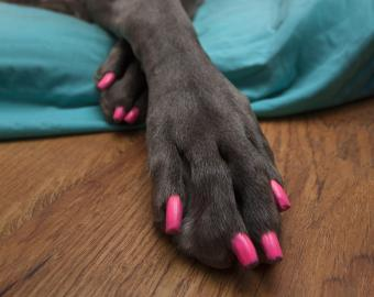 Guide to Dog Nail Polish Options