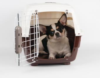 6 Best Dog Crates in Various Style Options
