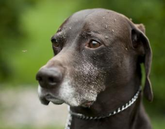 Do Natural Cures for Canine Heartworms Work?