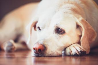 Best Diets for a Dog With Diarrhea + Tips