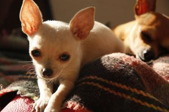 200 Mexican Puppy Names to Choose From