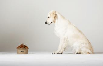 High Protein and Low Carb Dog Foods