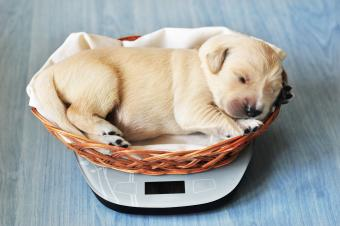Printable Puppy Weight Charts