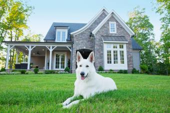 Do Electric Dog Fences Work?