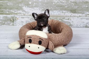 https://cf.ltkcdn.net/dogs/images/slide/232899-850x567-5-sock-monkey.jpg