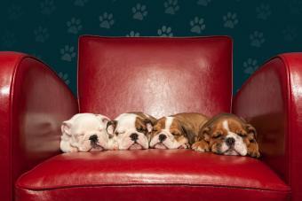 https://cf.ltkcdn.net/dogs/images/slide/232900-850x567-6-chair-full-of-cuteness.jpg