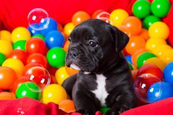https://cf.ltkcdn.net/dogs/images/slide/232904-850x567-12-balls-and-bubbles.jpg