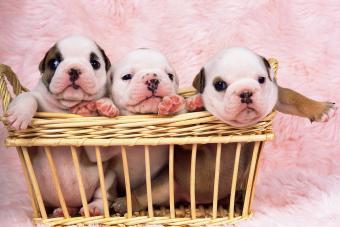 https://cf.ltkcdn.net/dogs/images/slide/232969-850x567-9-basket-of-babies.jpg