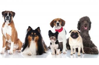 Various dog breeds in a row