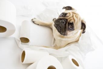 https://cf.ltkcdn.net/dogs/images/slide/234627-850x567-pug.jpg