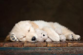 https://cf.ltkcdn.net/dogs/images/slide/234629-850x567-dog-with-teddy-bear.jpg
