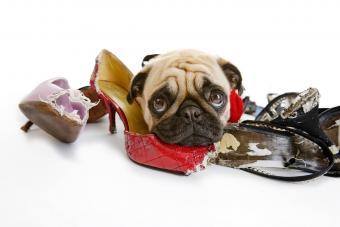 https://cf.ltkcdn.net/dogs/images/slide/234645-850x567-1-pug-puppy.jpg