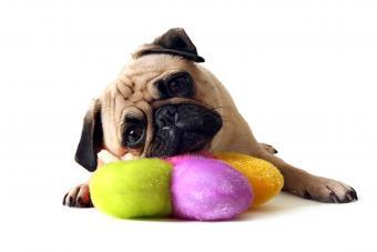 https://cf.ltkcdn.net/dogs/images/slide/234649-850x567-5-pug-puppy.jpg