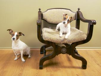 https://cf.ltkcdn.net/dogs/images/slide/234651-850x647-cute-dogs.jpg