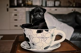 https://cf.ltkcdn.net/dogs/images/slide/234657-850x565-8-pug-puppy.jpg