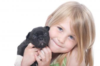 https://cf.ltkcdn.net/dogs/images/slide/234661-850x567-15-pug-puppy.jpg