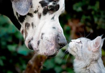 Can Cats and Dogs Be Friends? Tips for Nurturing This Relationship