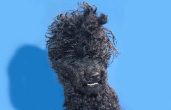Funny Looking Dogs That Make You Laugh