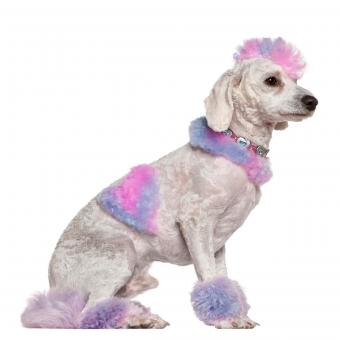 https://cf.ltkcdn.net/dogs/images/slide/234817-850x850-4-Funny_looking_dog.jpg